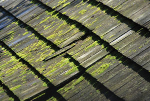 damaged cedar shingles | Cedar maintenance | Restore cedar shingles |